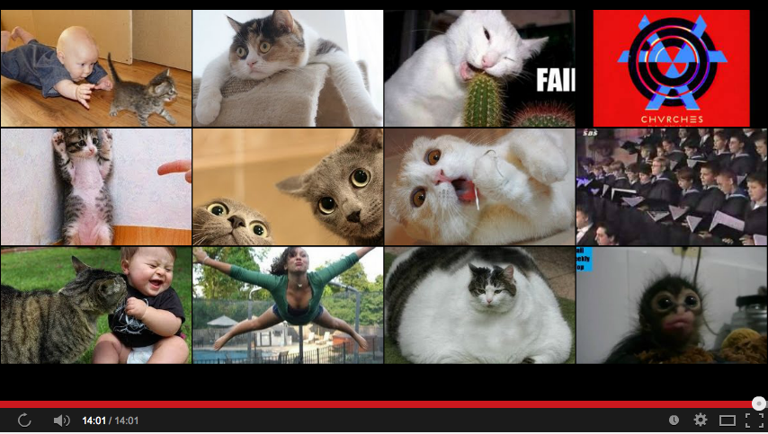 Youtube screenshot of cat video suggestions